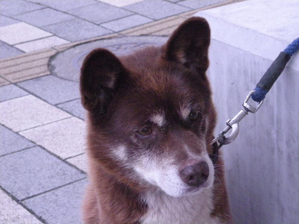 不思議そうに見つめる犬.JPG