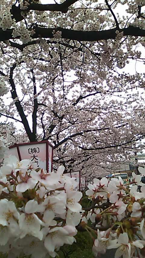弘前城城外道路