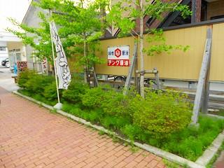 h25-7-16 レトロ草取り (1).jpg