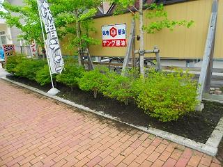 h25-7-16 レトロ草取り (6).jpg